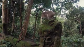 طبیعت زیبای بالی
