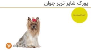 غذای سگ های نژاد یورکشایر تریر |غذای سگ