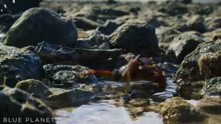 یک نبرد دیدنی 3 جانبه بین خرچنگ و اختاپوس و موجودی عجیب