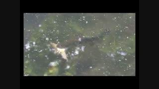 در جنگل شیر حیات وحش را می خورد ولی در دریا  ماهیهای دیگر را چه حیوانی می خورد را ببینید