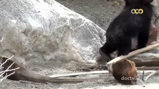 فرهنگ و طبیعت ایران-خرس کوچولو