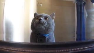وقتی گربه تو خونه تنهاس چیکار میکنه؟
