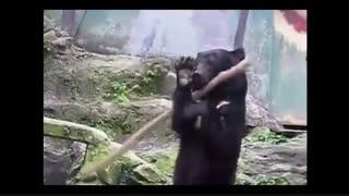 خرس کونگ فو کار واقعی!