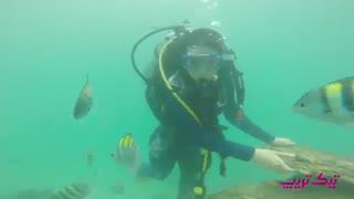 گردشگری درجزیره زیبای مرجانی کیش
