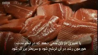 #تراریخته چیست؟ در این ویدئو ببینید.