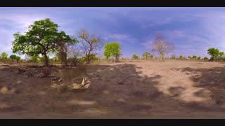ویدئوی 360 شیرهای آفریقا
