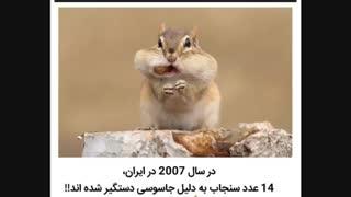 سنجاب های جاسوس :::///دانستنی....