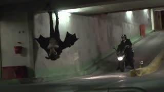حمله خفاش شب