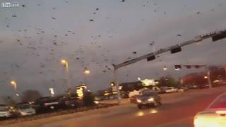هجوم پرندگان - آمریکا