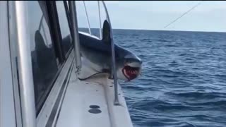 گیر کردن کوسه بدشانس در قایق تفریحی