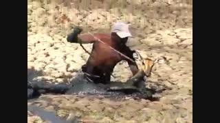 انسان و حیوان