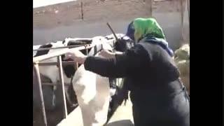 قهرمانان همت و تلاش - برداشت هفتم