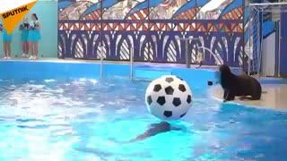 نمایش فوتبالی دلفین ها در سوچی روسیه