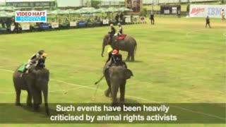 چوگان با فیل