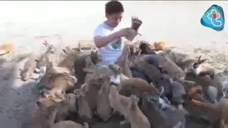 جزیره خرگوشها
