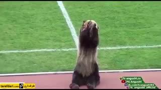 آغاز دیدار فوتبال در لیگ دسته سوم روسیه توسط خرس