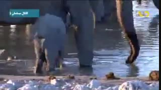 راههای جالب تخمین سن بچه فیل ها