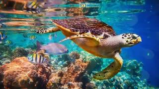15تااز زیباترین حیوانات جهان