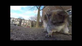 دزدیده شدن دوربین توسط سنجاب جسور