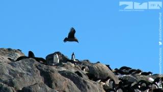 دزدیده شدن دوربین حیات وحش توسط مرغ دریایی