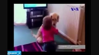سگ بازی در خانواده های ایرانی...استاد پورآقایی