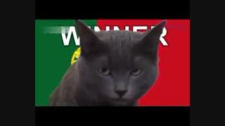 پیش بینی گربه جام جهانی برای بازی ایران و پرتغال و حیوانات دیگر