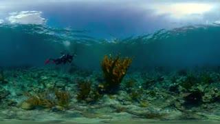 طبیعت بکر زیر آب نشنال پارک