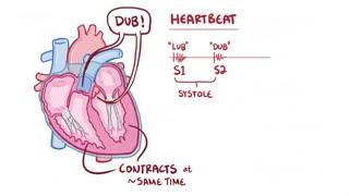 آناتومی و فیزیولوژی سیستم گردش خون (قلب)