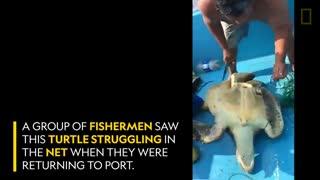 آزاد کردن لاک پشت از تور ماهیگیری
