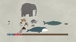 چرا عمر حیوانات با یکدیگر متفاوت است؟ ( همراه با زیرنویس فارسی)