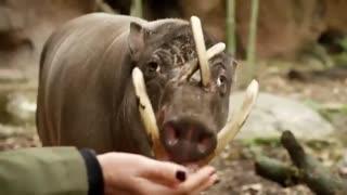 مستند حیوانات باهوش (دوبله فارسی)