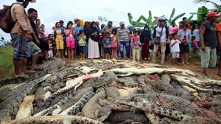 قتل عام 300 تمساح در اندونزی