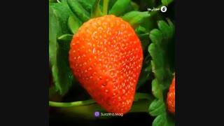 باغچه خانگی با میوههای رنگارنگ داشته باشید!