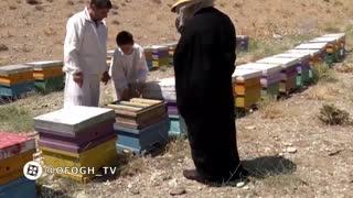 برنامه چوب خط - پرورش زنبور عسل در شهرستان دماوند
