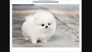 کی باورش میشه این یه سگه و عروسک نیست؟ ( آخریه وقتیه که بزرگ شده)