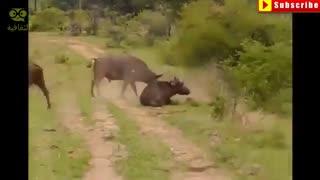 حمله های خطرناک حیوان وحشی به انسان