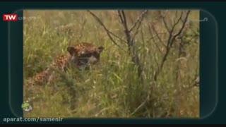 مستند رازبقا - این قسمت شکارچیان مخفی