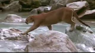 از برترین فیلم های مستند در حیات وحش