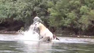 جنگ جانانه اسب ها