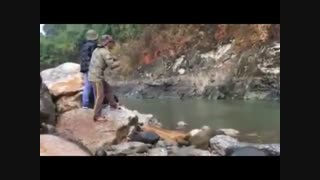 فیلم هیجانی زیباترین ماهیگیری بزرگ با لنسر در رودخانه