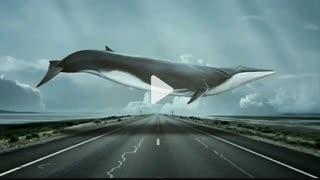 رمان نهنگ آبی
