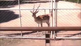 باغ وحش بوینوس آیرس آرژانتین