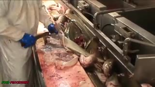 واقعا ببینید که ماهیگیری  صنعتی چه بلایی داره سر دریا ها میاره