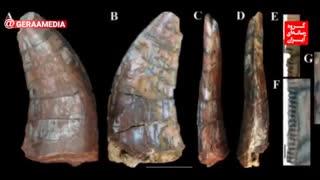 آیا فسیل دندان دایناسور ایرانی موجود در موزه ملی تاریخ طبیعی برزیل سوخته است؟!