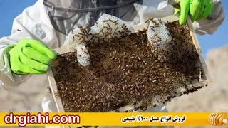 چه عسلی طبیعی و چه عسلی تقلبی است؟