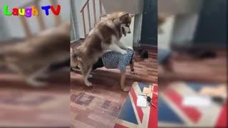 وقتی سگ مربی تمرینی باشه