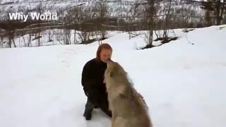 کلیپ جالب/در آغوش گرفتن انسان توسط حیوانات