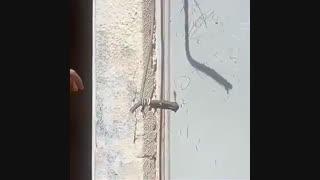 قطع برق ساکنان خانههای قدیمی محدوده طرح توسعه حرم شاهچراغ توسط مسئولان توسعه حرم