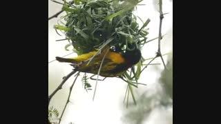 لانه سازی پرنده