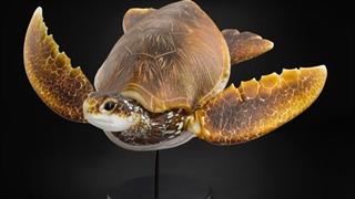 ساخت لاکپشت شیشه ای زیبا
